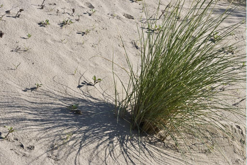 territorio Dune Alberoni